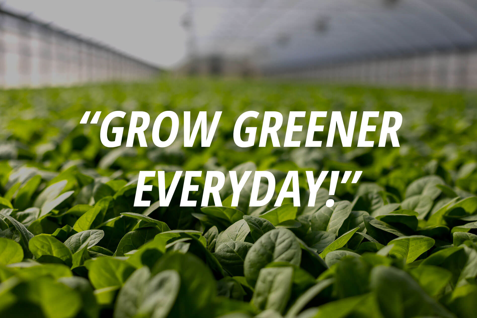 Grow Greener Everyday Quote
